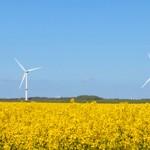 Windkraft und Raps